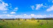 Bushy-Park-View