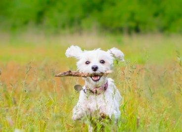 Dog freindly